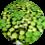 plovoucí akvarijní rostliny