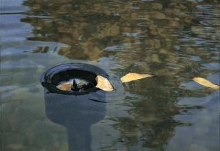 Jak wybrać skimmer jeziorkowy i jak go podłączyć