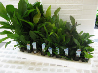 Formy roślin akwariowych w naszym eShopie, pakowanie, wysyłka i jaki rodzaj roślin wybrać