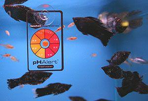 Jakie parametry wody w akwarium warto znać i regularnie kontrolować