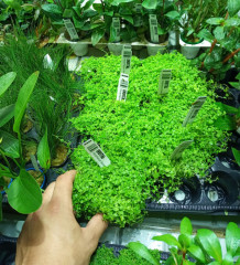 Jak pakujemy i wysyłamy rośliny