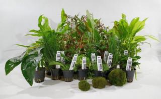 Film instruktażowy - jak sadzić rośliny w akwarium