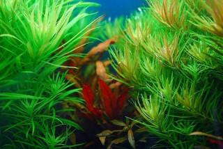 Azotany i fosforany z nawozu nie powodują glonów! Dlaczego?