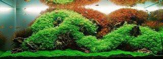 Relacja glony vs rośliny